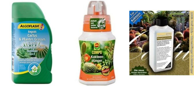 Top 6 Best Cactus Succulent Fertilizers Why We Like This Ca